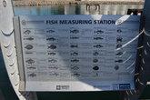 Описание рыб на портовом пирсе