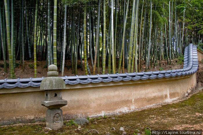 Бамбуковая заросль по дороге к кладбищу в Адасино Нэнбуцу-дзи