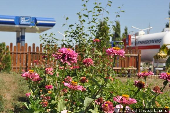 В ожидании заказа мы успели рассмотреть летние цветы, пережившие июльско-августовский зной...