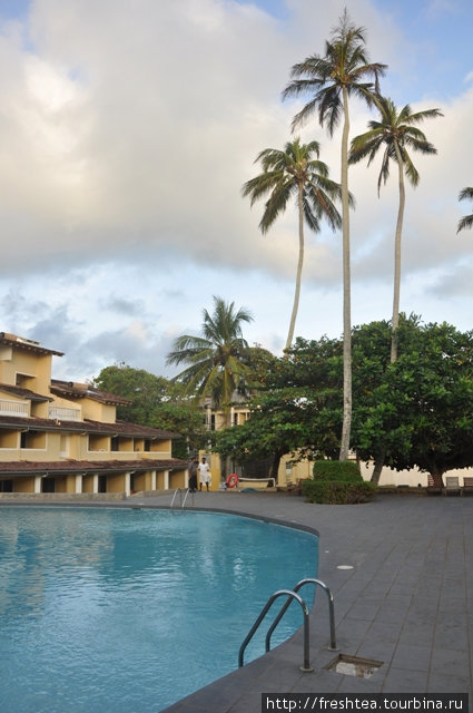 У отеля в собственности с десяток высоких тонкостволых пальм. Их кроны регулярно очищают от старых листьев, удаляют громадные бутоны и кокосы, так что  падающих с высоты орехов бояться не стоит.