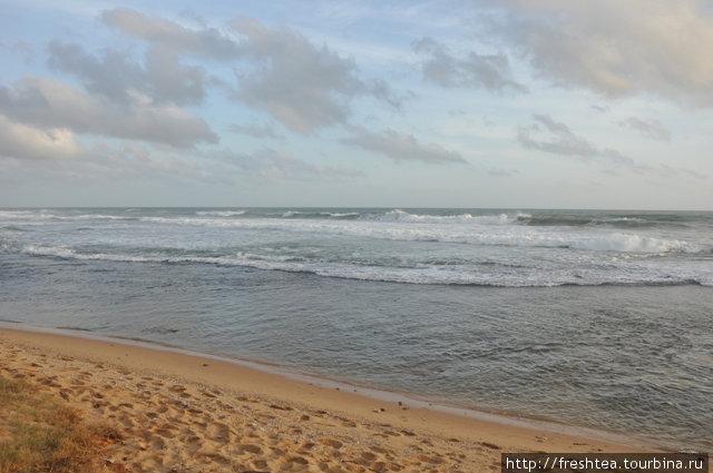 У берега рядом с отелем — риф, где можно наблюдать мелких коралловых рыбок и морских ежей. Если не слишком волнит, конечно.