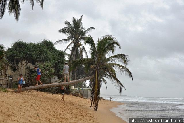 Пальмы висят прямо у кромки воды — такие себе скамейки или опора при фотосессии на память...