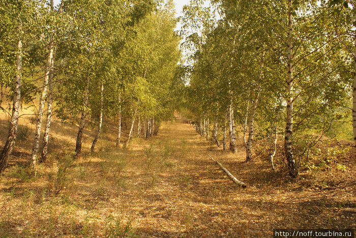 Редкое зрелище в наших лесах — ровная просека без бурелома и мусора.