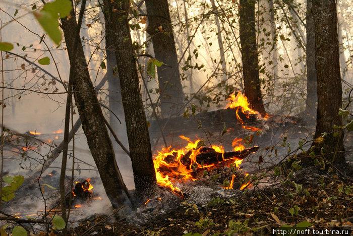 Горит лес на Могутовой горе в Жигулёвске. Жаркое лето — 2010.