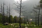 Ещё мы забирались на одну из гор около озера на высоту в 4000. Здесь уже довольно уныло.