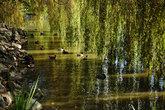 В парке Минору
