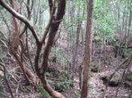 Лес-самоубийств встречает нас своей исареженной природой. По статистике около 20 тел каждый день находят спасатели