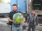 огромный арбуз (20+ кг)
