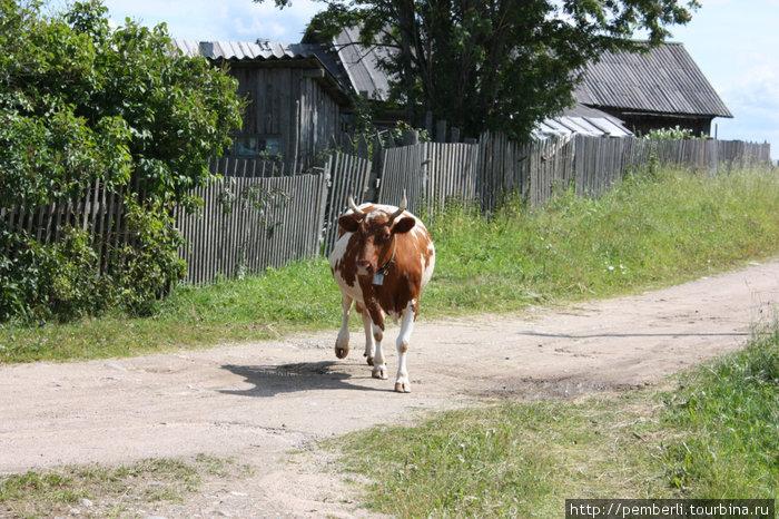 В деревне, помимо  того, что там просто красиво есть и свои достопримечательности. Например, последняя в деревне корова ))