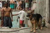 Моются не только люди, но и собаки