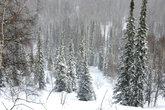 После снегопада. Сбывшаяся мечта :)
