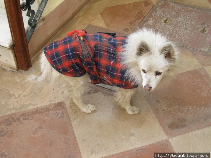 Сторожевая собака в отеле