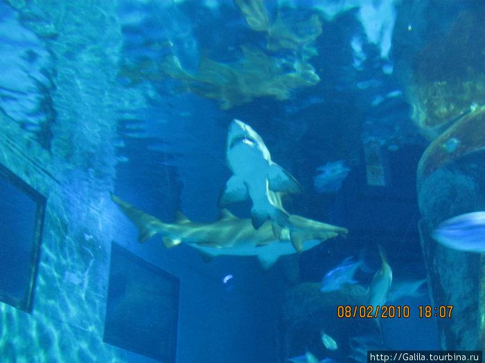 Акулы и скаты.