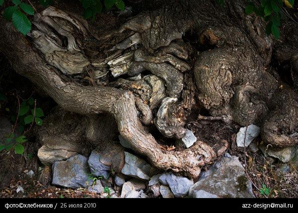 корни и камни / река ай