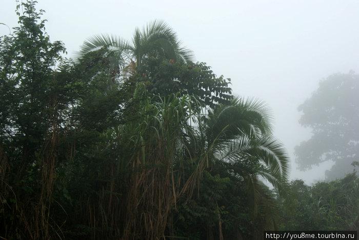 джунгли