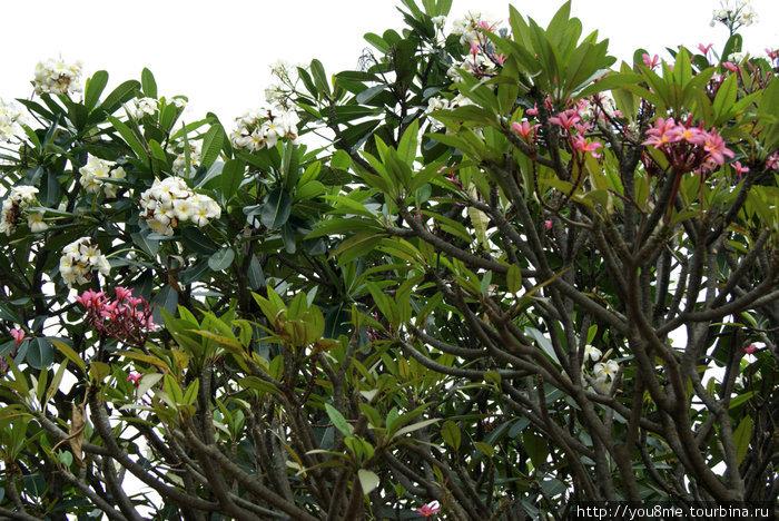 тропические растения