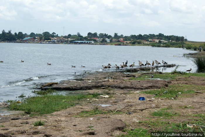 портовый город Энтеббе