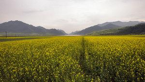 От города ведет дорога в горы покрытые до трех с половиной тысяч метров бесконечными полями люцерны.