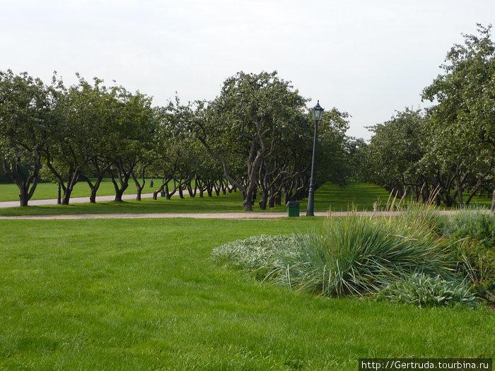 Старый яблоневый сад.