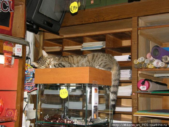 Итальянский сторожевой кот