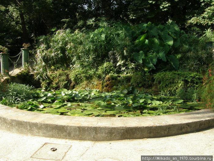 Пруд с лилиями во дворце Казерта