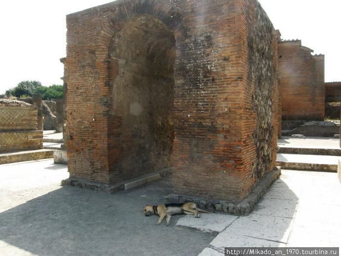 Один из современных жителей Помпеи