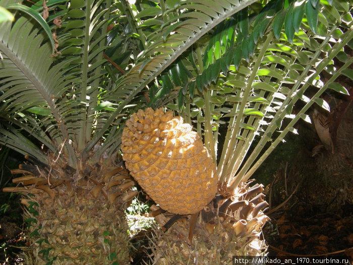 Похоже на ананас