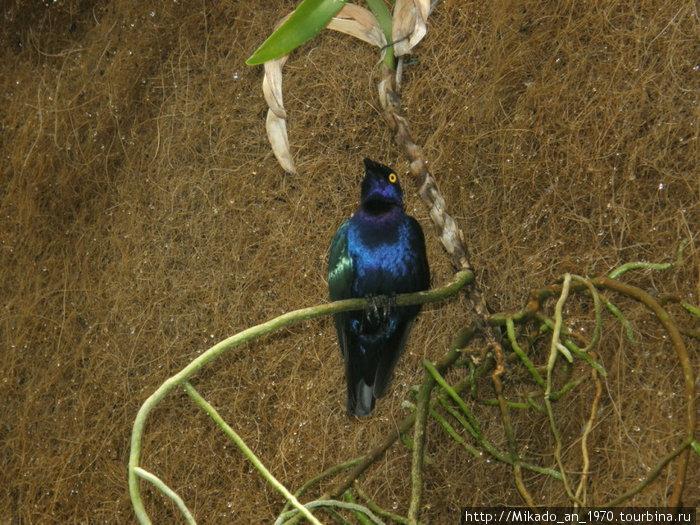 Синяя птица в орхидеевском павильене