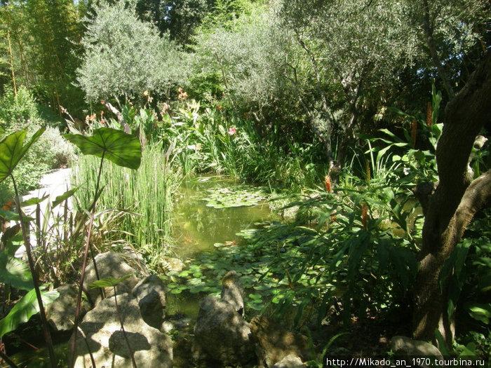 Заросший пруд в саду Ла Мортелла