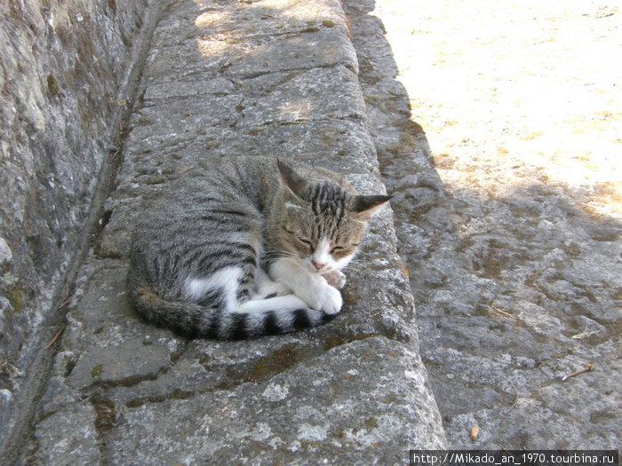 Серая кошка на серых камнях