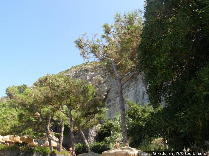 Сосны перед скалой
