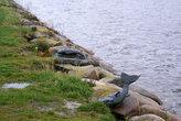 берег залива с остатками улова богов