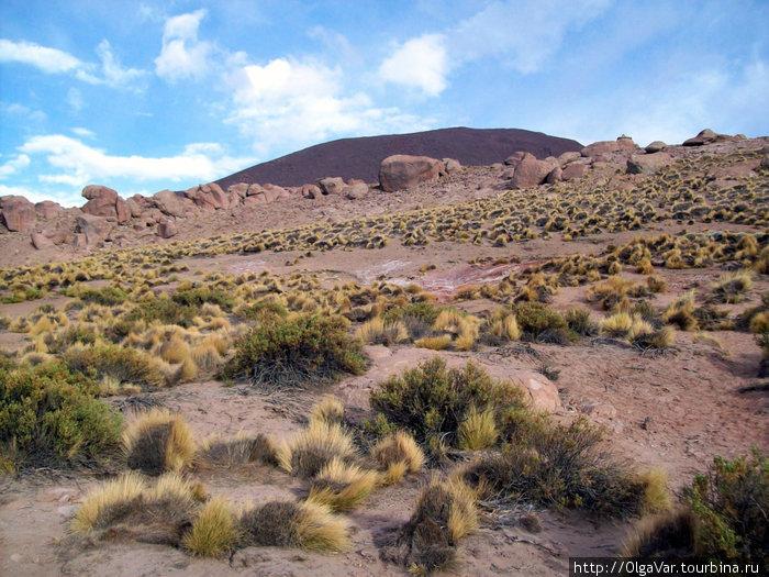 Склоны вокруг долины, однако ж, покрыты  не буйной  зеленью