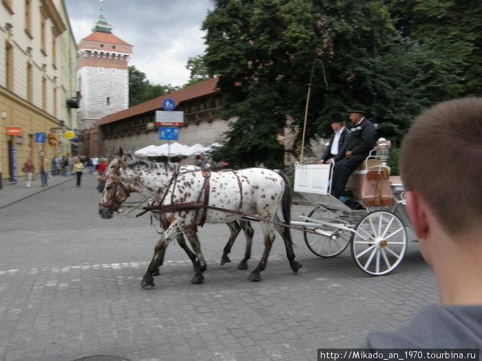 Маршрутка по Краковски