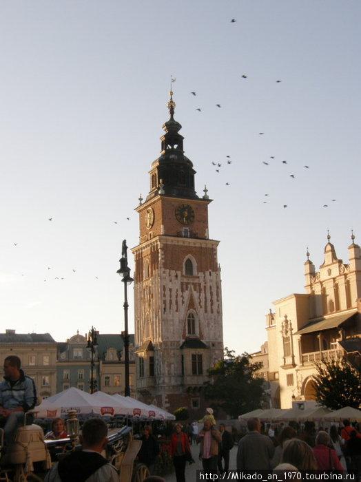 Птицы над Краковым