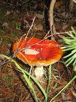 И грибы тоже сказочные :)
