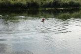 Купание в реке Угра