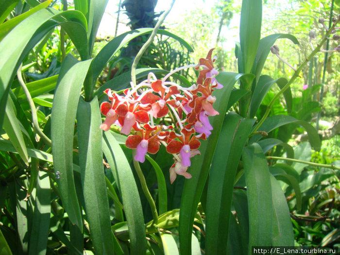 Парк орхидей Денпасар, Индонезия