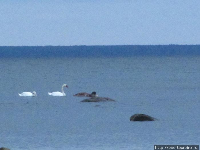 каменистое мелководье стало приютом для многих водоплавающих птиц