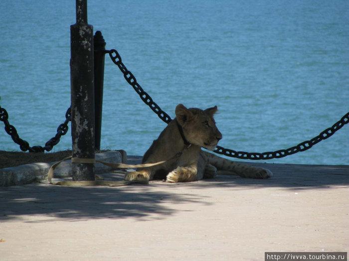 Львенок Симба