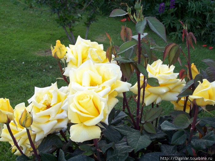 Городок весь утопает в розах