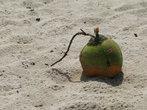 кокосовая бомба