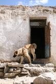 Памирская собака. Снаружи