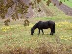 Лошадка на поле