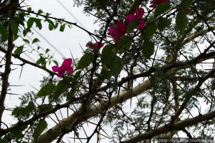 цветы и колючки