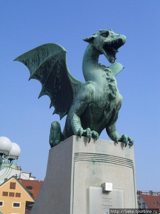 Один из драконов