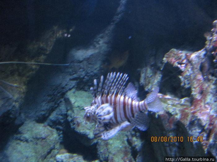 В аквариуме.