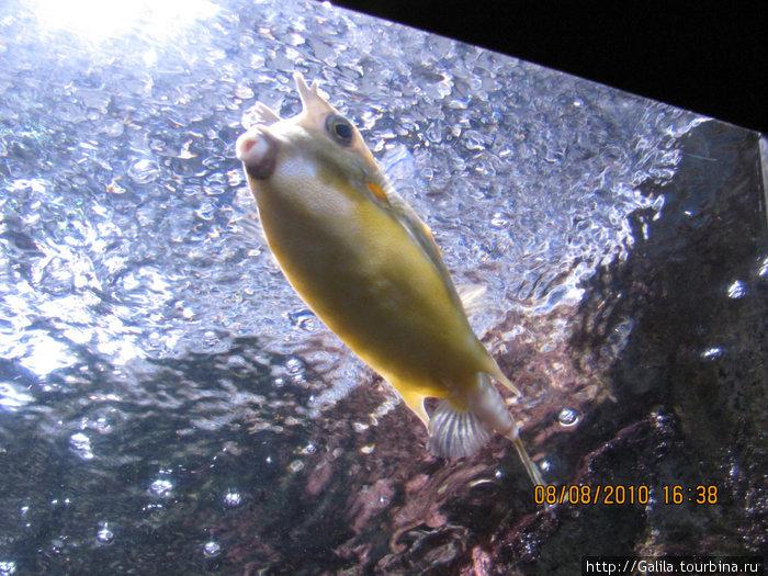 Очень симпатичная рыбка.