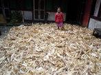 Сушится кукуруза