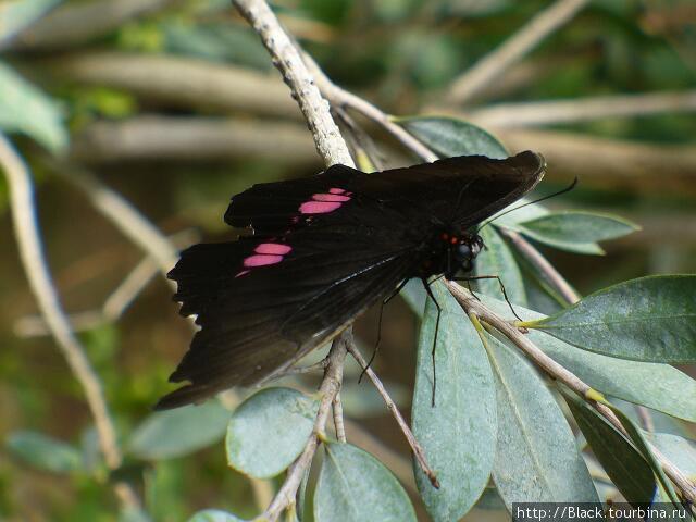 В саду бабочек. Анхизиада